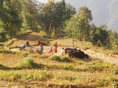 nepal-036